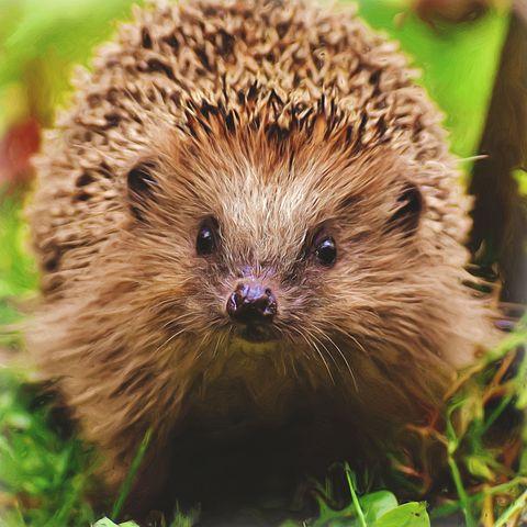19.11.2020 - Uspávání ježků
